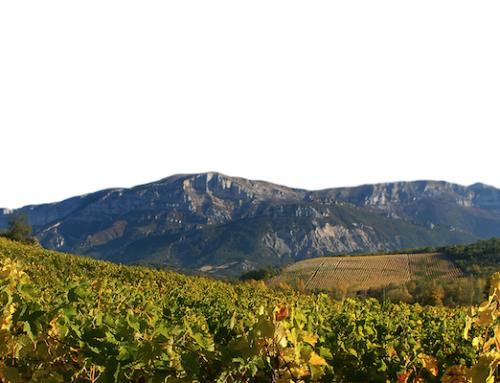 Découvrez JAILLANCE et sa sélection de quatre vins pétillants issus de ses terroirs !